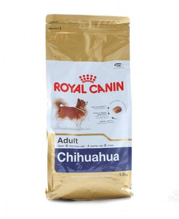 RC adult chihuahua 1,5kg